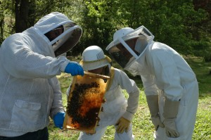 Cover photo for Introduction to Beekeeping
