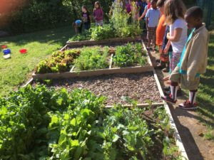 Children looking at the raised beds.