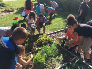 Children working in raised bed gardens