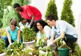 Cover photo for 2019 Extension Master Gardener (EMG) Volunteer Course