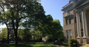 Cover photo for Uptown Tree Canopy Receives Makeover